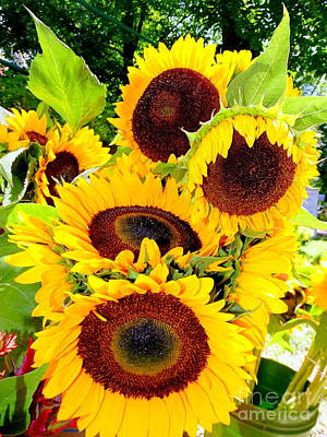 Photograph - Farm Stand Sunflowers #7 by Ed Weidman