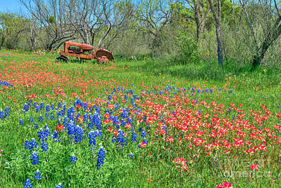 Springtime Photograph - Farm Tractor And Wildflowers by Tod and Cynthia Grubbs