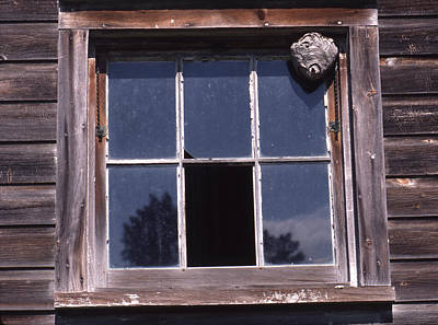 Photograph - Farm Window With Paper Wasp Nest by Paul Ross