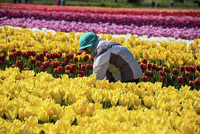 Photograph - Farm Worker In Tulip Field by Tom Cochran