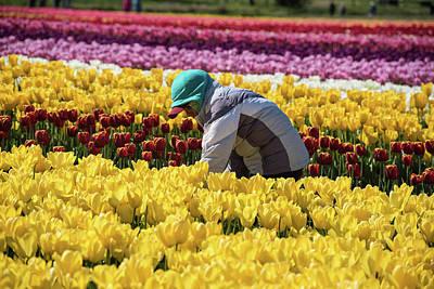Photograph - Farm Worker In Tulip Field by Tom Cochran