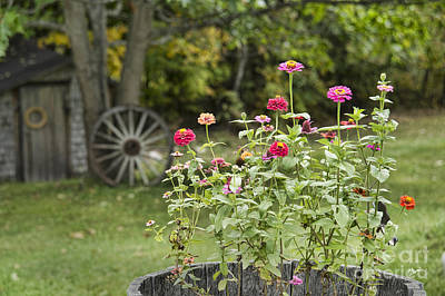 Maine Landscapes Photograph - Farm Yard Blooms by Alana Ranney
