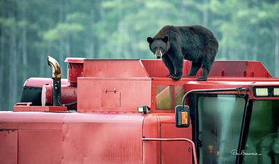 Dan Beauvais Royalty-Free and Rights-Managed Images - Farmer Bear 8819 by Dan Beauvais