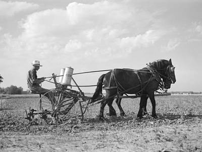 Farmer Fertilizing Corn Print by Arthur Rothstein