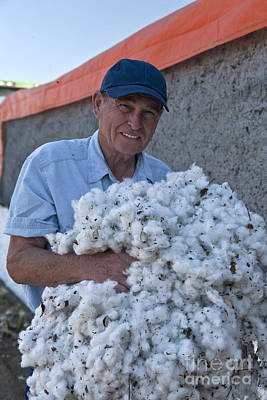 Bio Cotton Photograph - Farmer Holding Harvested Gm Cotton by Inga Spence