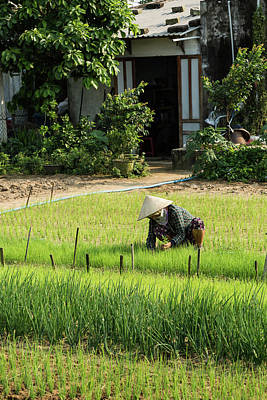 Que Photograph - Farmer Tending Crops In The Sun by Lahiru Ranasinghe