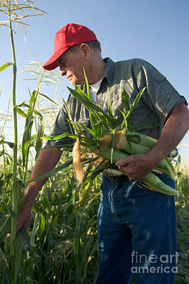 Sweet Corn Farm Photograph - Farmer With Corn by Inga Spence