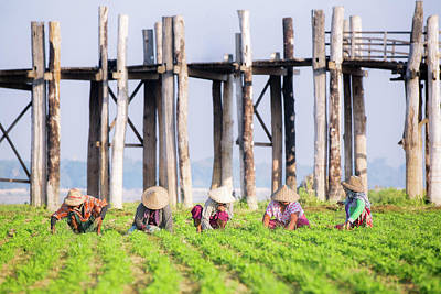 farmers at work around U-Bein Bridge Art Print by Anek Suwannaphoom