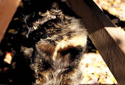 Photograph - Farmhouse Cat by Margie Avellino