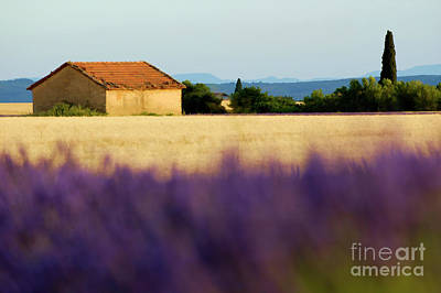 Digital Art - Farmhouse In A Harvested Wheat Field Surrounded By Lavender Fields by Sami Sarkis