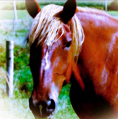 Photograph -  Horse Portrait by Femina Photo Art By Maggie