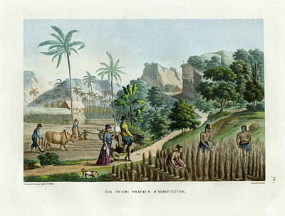 Drawing - Farming On Guam Island by d apres Pellion