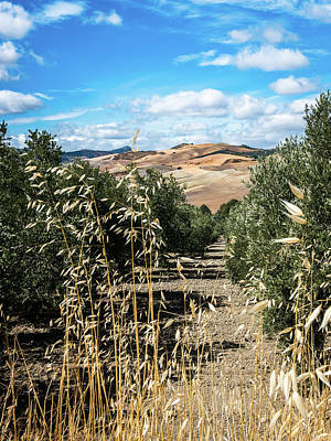 Photograph - Farmland In Andalucia by Michael Thomas