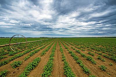 Photograph - Farmland On The North Fork by Robert Seifert