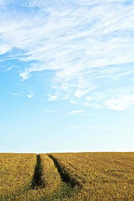 Cornfield Photograph - Farmland To The Horizon 2 by Heiko Koehrer-Wagner
