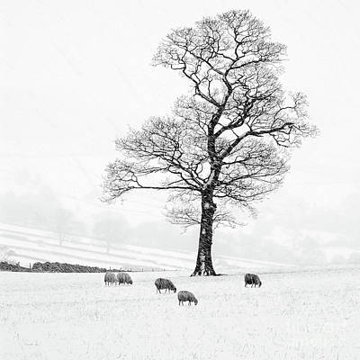 Trees In Snow Photograph - Farndale Winter by Janet Burdon