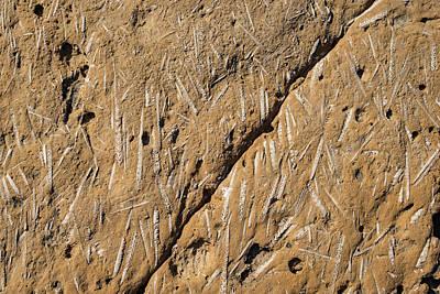 Photograph - Fascinating Fossils Take Two by Georgia Mizuleva