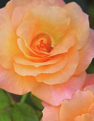 Peach Photograph - Fascination by The Art Of Marilyn Ridoutt-Greene