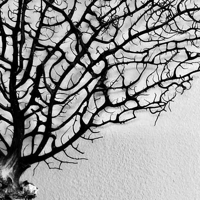 Photograph - Fascination With A Sea Fan  by Patricia E Sundik