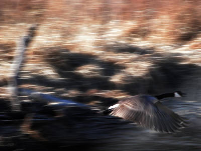Canadian Geese Mixed Media - Fast And Low by Stuart Turnbull