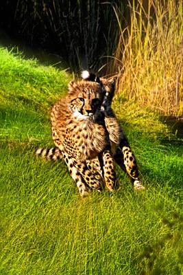 Photograph - Fast Cheetah Cubs by Miroslava Jurcik