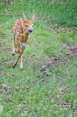 Photograph - Fast Fawn by Peg Runyan