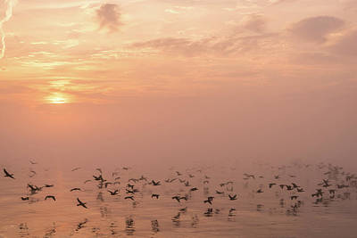 Photograph - Fast Flight In Soft Pink Mist by Georgia Mizuleva