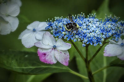 Photograph - Fast Food For Bumblebees by Belinda Greb