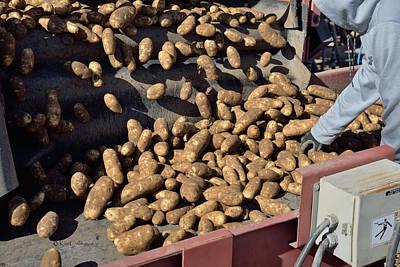 Photograph - Fast Moving Potatoes by Kae Cheatham