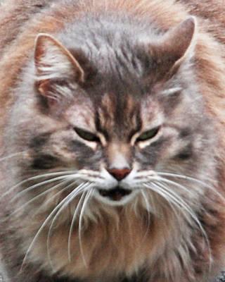 Fat Cats Of Ballard 4 Art Print