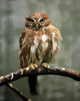 Pygmy Owl Wall Art - Painting - Fat Fluffy Pygmy Owl by Elaine Plesser
