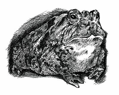 Drawing - Fat Toad In Ink by MM Anderson