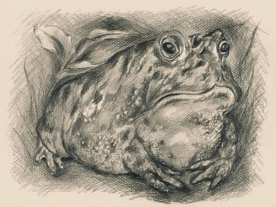 Drawing - Fat Toad by MM Anderson