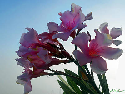 Oleander Photograph - Fatal Attraction by Michael Durst
