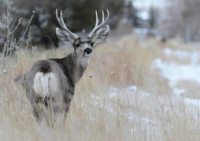 Photograph - Father Deer by Rae Ann  M Garrett