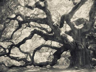 Angel Oak Photograph - Father Time by Amy Tyler