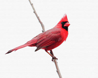 Photograph - Father's Day Cardinal by Anita Oakley