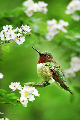 Fauna And Flora - Hummingbird With Flowers Art Print