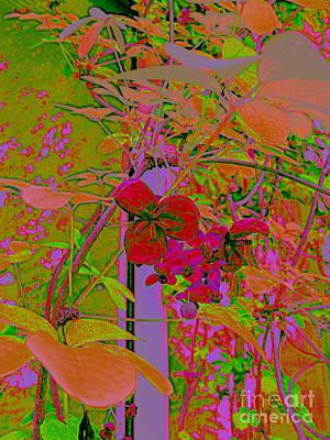 Photograph - Fauve Flower by Nancy Kane Chapman