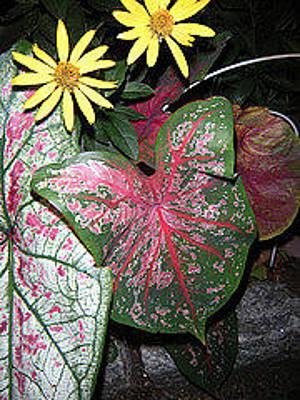 Photograph - Favorite Flowers by Brynn Ditsche