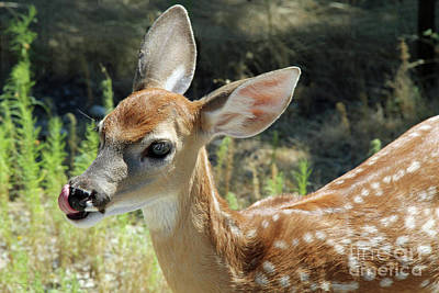 Photograph - Fawn by Inspirational Photo Creations Audrey Woods