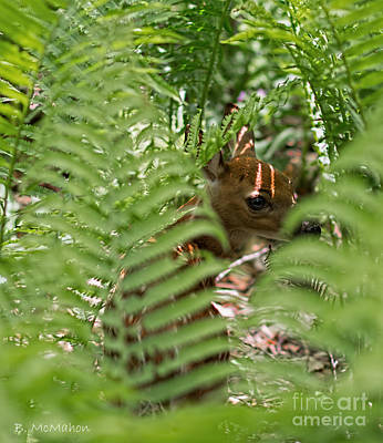 Photograph - Fawn Hiding In Ostrich Fern by Barbara McMahon