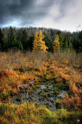 Photograph - Fawn In A Larch Wallow by Wayne King