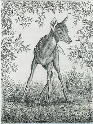 Fawn In Clearing Art Print by Samuel Showman