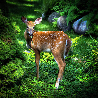 Art Print featuring the photograph Fawn In The Garden by David Patterson