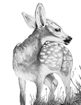 Drawing - Fawn by Lawrence Tripoli