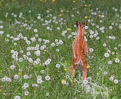 Photograph - Fawn Memories by Barbara McMahon