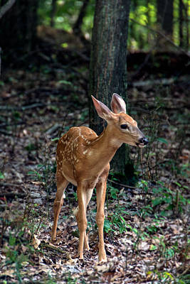 Metro Park Photograph - Fawn by Michael Demagall