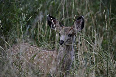 Photograph - Fawn Of The Grass by Rae Ann  M Garrett