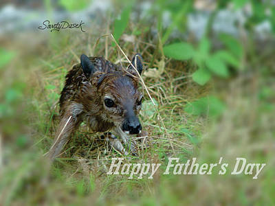 Photograph - Fawn by Sandy Dusek